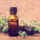 8 Of The Best Uses Of Red Thyme Essential Oil